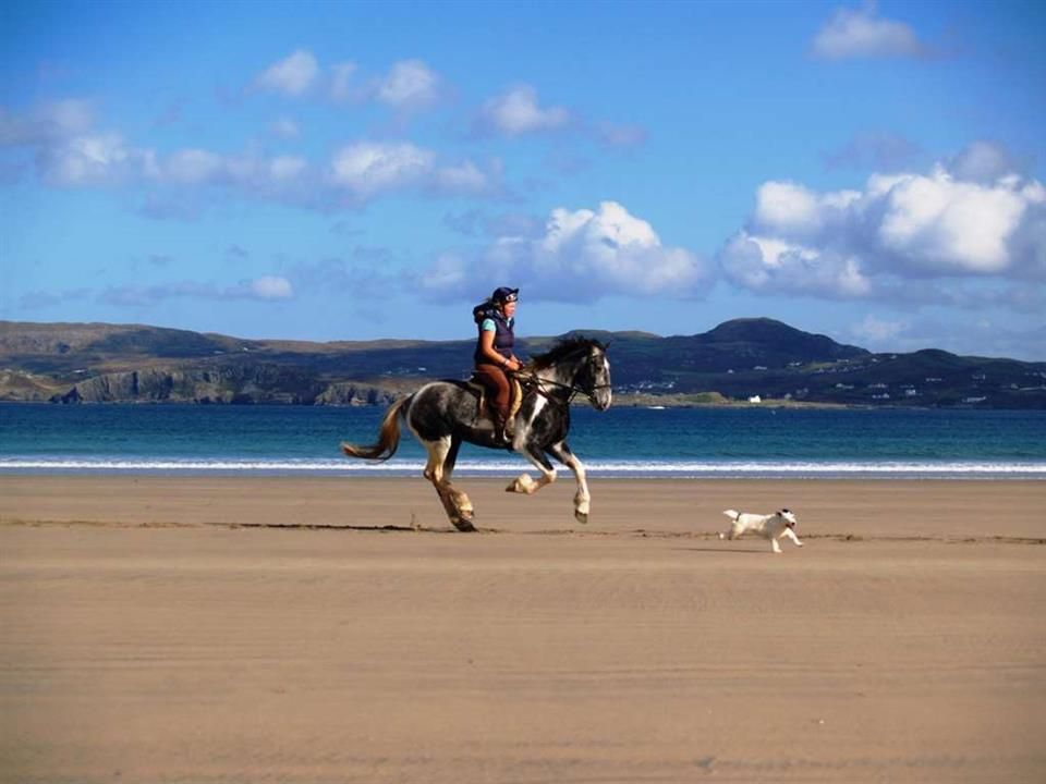 Arnolds Hotel Horse Riding on the Beach