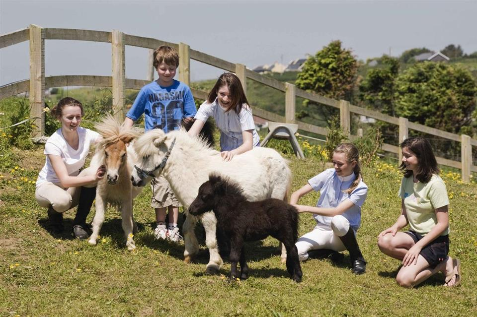 Dunmore House Hotel Petting Farm
