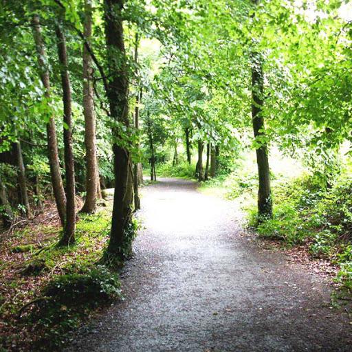 rathwood forest walk