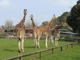 Travelodge Cork - Fota Wildlife Park